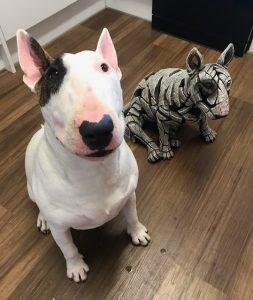 Raffle winner's prize of Bull's Eye Bull Terrier