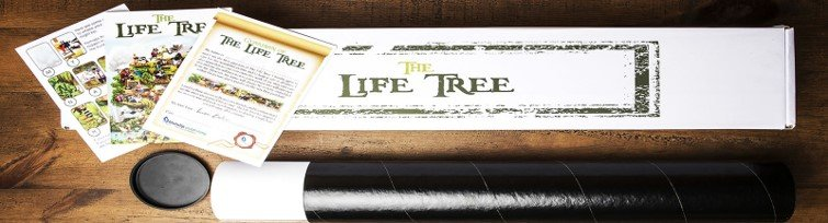 Paper and Canvas only Box for The Life Tree